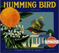 Humming Bird brand