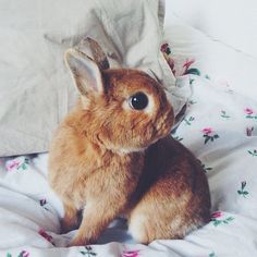 bunny rabbit, anim, funny bunnies, bed, pet, baby bunnies, fluffy bunny, easter bunny, flower