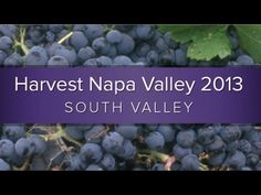 Harvest Napa Valley 2013 South Valley #napavalley #napaharvest #harvest2013