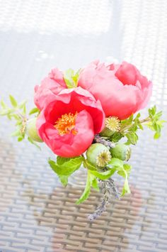 Peonies and poppy pods