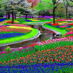 Beautifully-colored tulip field