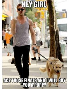 Ryan Gosling will buy you a puppy if you ace your finals