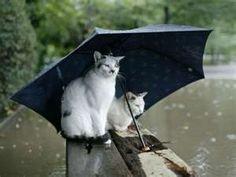 cat, shelter, funny pictures, umbrella, desktop backgrounds, dog, rain, friend, animal