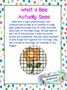 Honey bees what they see from prek k sharing more