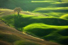 """Oak"" by Marcin Sobas, via 500px. god, beauti place, names, green, blue stuff, photography"