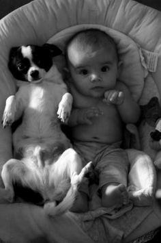 Esta foto me recuerda cuando Antal era bebe y la Chavi lo cuidaba y defendía mucho!! Esta en el cielo de los perros y feliz!!!