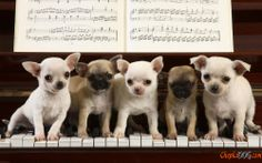 Photo de chiens de petite taille