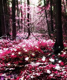 a magical forest
