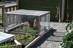 Garden Chicken Tractor - How to Let the Animals do All the Work!