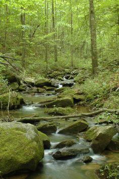 The Emerald Forest, Cullman County, Alabama