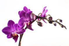 Orquídeas by Martha Di Giovanni on 500px