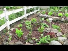 Tomato Gardening : How to Use an Epsom Salt Mix as a Fertilizer for Toma...