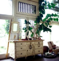 I like this chest and the plants. interior design, debi treloar, old drawers, old dressers, green, tree houses, inside plants, design art, windows