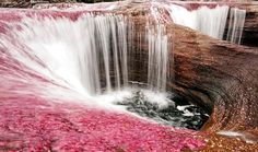 "Cano Cristales is a Colombian river located in the Serrania de la Macarena, province of Meta. The river is commonly called ""The River of Five Colors,"" ""The Liquid Rainbow"" or even ""The Most Beautiful River in the World"" due to the algae produced colors like red, yellow, green and blue at the bottom of the river giving it a unique appearance."
