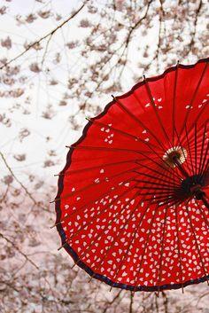 Parasols http://annagoesshopping.com/umbrellas