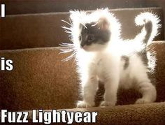 Fuzz Lightyear lights, angel, cats, animals, fuzzy wuzzy, kittens, kitti, kitty, cat lady