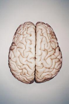 understanding how the brain speaks two languages