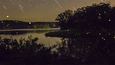 Time lapse Scenes of Swarming Fireflies by Vincent Brady