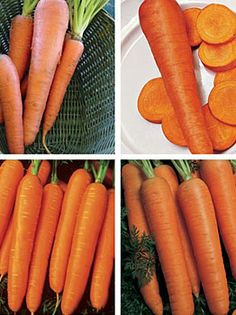 Cooks Custom Blend. Great blend of four carrot varieties with different maturities, flavor and disease resistance. Kuroda,(high yielding, great for juicing),Rothild (rich in beta carotene), Touchon(french heirloom) and Napoli (famous sugar carrot fall/winter gardening).