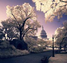 ::lived:: Washington, DC