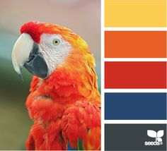 Color: Macaw Spectrum by Design Seeds - deep gold, orange, red, blue, deep grey.