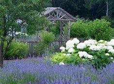 Flower garden gate white flowers, cottag, landscap architect, blue flowers, lavender fields, edmund holland, english country, garden, hydrangeas