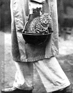 WWI Cat