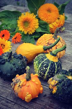 gourds and flowers
