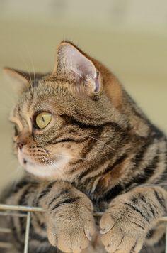 """You can't own a cat.  The best you can do is to be partners."" -- Sir Harry Swanson"