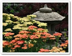 """Our Little Acre: """"Six Reasons to Plant a Garden"""""""