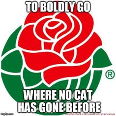 Roses don't grow in Tucson.