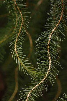Pine detailॐ☚★ #ONELOVE #chinashavers  #justbecause  #theeblackunicorn #black #unicorn   #
