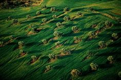 © 2011 - Yann Arthus Bertrand  •  Orchard among the wheat, Macedonia, Greece. http://www.thextraordinary.org/yann-arthus-bertrand