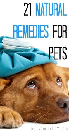 21 Natural Remedies for Pets  #pets #natural #homeopathic