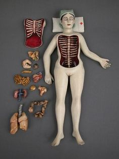 body parts, doll, toy, laferrier cinderhous, anatomi