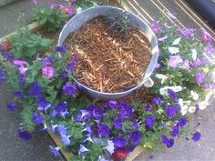 Petunias 5-27-2012