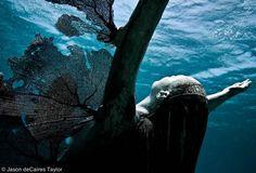 cancun mexico, decair taylor, art museum, underwat sculptur, jason decair, human nature, underwater art, sculpture art, coral reefs
