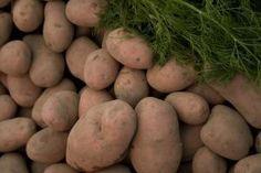 How to Make a Potato Bag for Growing Potatoes