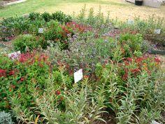 Heat tolerant plants; Butterfly gardens; Rose gardens