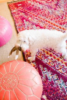 Kim France of Lucky Magazine and Girls of a Certain Age // living room // color // moroccan poufs // dog // photography by Trent Bailey Photography