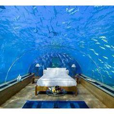 Amazing Fish Tanks On Pinterest Amazing Fish Tanks Fish Tanks And
