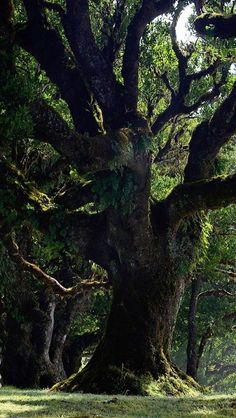 """""""Trees are sanctuaries. Whoever knows how to listen to them, can experience the truth. They do not teach learning and precepts, they preach, undeterred by particulars, the ancient law of life."""" ~ Herman Hesse"""
