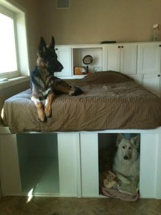 Love this dog bed/dog house in one! Must do!