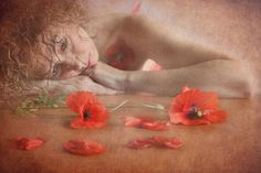 Fragile poppies' stories 3 by romina dughero
