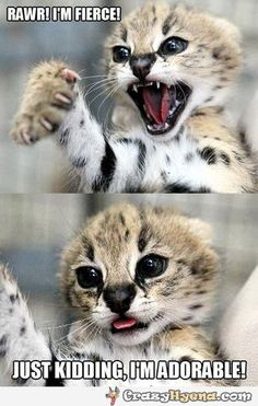 Baby ghepard is fierce, yet so adorable. | Funny Pictures, Quotes, Photos, Pics, Images. Free Humorous Videos and Facebook Covers