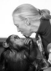 Jane Goodall : A young girl who loved animals and dreamed of going to Africa and found a way of making that dream come true. Her work changed the way we understand ourselves.   (via NatGeo)