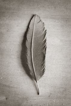 a feather made of paper . . .
