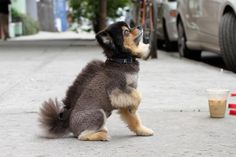 I'm a bearded, Mohawk, squirrel-ly, whatchamacallit!