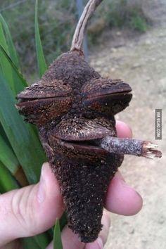 Highest acorn I've ever seen.