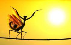 Mediterranean Mantis. Photo: Hasan Baglar. National Geographic Photo Contest